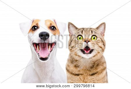 poster of Portrait Of Cute Dog Jack Russell Terrier And Cheerful Cat Scottish Straight Isolated On White Backg