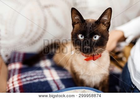 poster of Funny Cat With A Red Bow Tie Close-up. Cat With Butterfly. Cat With Eye Defect. The Concept Of Fashi