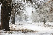 Winterlandschaft der Richmond Park