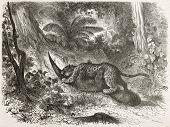 Jaguar killing tapir in Amazon jungle. Created by Riou and Huyot, published on Le Tour du Monde, Paris, 1867