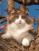 Gorgeous diluted calico cat up in a tree in winter