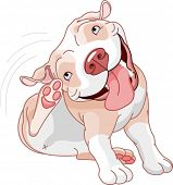 Illustration of a cute pit bull scratching over white background