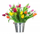 picture of flower arrangement  - Bunch of tulips in tub isolated on white background - JPG