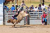 BOULDER - AUGUST 27th: unidentified cowboy rides in the bareback bull-riding competition at Jefferso