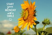 Inspirational Monday Quote- Start Your Monday With A Smile. With Beautiful Sunflowers And  Morning L poster