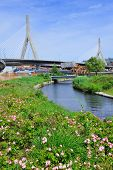Boston Leonard P. Zakim Bunker Hill Memorial Bridge with blue sky in park with flower as the famous