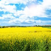 Beautiful spring panoramic shot with rapeseed meadow and shining sun