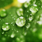 fresh green leaf with water droplets, super macro