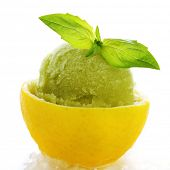 image of sorbet  - lemon - JPG