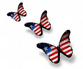 Three Liberia Flag Butterflies, Isolated On White