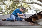 Man Prying Rotten Wood From Leaking Roof