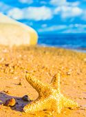 Sea Starlet Starfish called Wanda