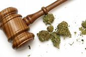 stock photo of marijuana plant  - Marijuana and a gavel together for many legal concepts on the drug - JPG