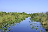 picture of marshlands  - Everglades National Park is a national park in the U - JPG
