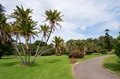 stock photo of royal botanic gardens  - THis image shows a view within the Royal Botanical Gardens - JPG