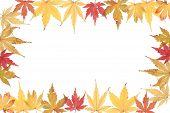 Herbstliche Acer Endframe