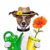 Jardineiro de cão