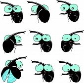 scarab beetle emotion
