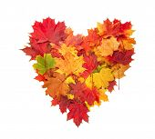 Colored autumn leaves in heart shape isolated on white background