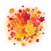 Colored autumn leaves isolated on white background
