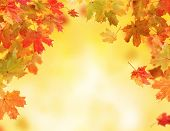 Colored autumn leaves falling down on blur background