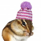 Portrait Of Funny Chipmunk With Hat On White