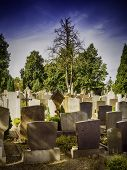 stock photo of pain-tree  - Graves in a cemetery with trees in the evening - JPG