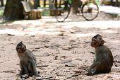 Feeding A Monkeys