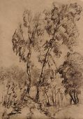 Charcoal drawing of two tall birches at a country road