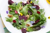 picture of baby goat  - Beets with walnuts goat cheese and baby greens organic salad - JPG