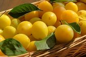 Yellow Honey Plum