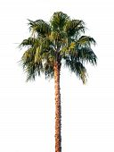 Bright Palm Tree Isolated On White Background