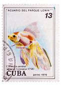 Postage Stamp Printed In The Cuba Shows Carassius Auratus Auratus - Asian Goldfish