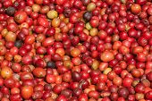 Red Berries Coffee Beans