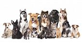 Cat and dog,Group of dogs and cats  sitting in front of a white background  poster