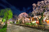 Gion in Kyoto with sakura tree at night