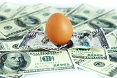 image of egg-laying  - Lay eggs on the dollars pile as background - JPG