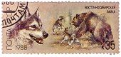 Ussr - Circa 1988: A Stamp Printed In Ussr, Shows East Siberian Husky, Bear Hunt, Series Hunting Dog