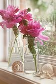Closeup of peony flowers in milk bottles in the window