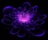 Beautiful Blue And Purple Flower On Black Background. Computer Generated Graphics.