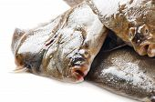 image of flounder  - Fresh fish  - JPG