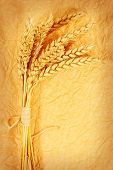 spikelets of wheat on a crumpled paper