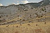Front Range Elks