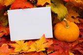 stock photo of thank you card  - A blank card with a gourd sitting on a fall leaf background blank card - JPG