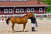 Red horse with trainer in a paddock.