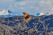 Pray Bird In Parque Nacional Torres Del Paine, Chile