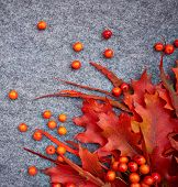Autumn background . Rowan and leaves