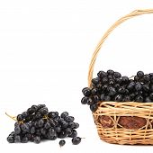Dark grapes in a wicker basket.