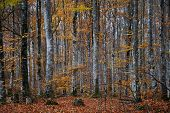 Beech Forest View