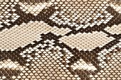 picture of jungle snake  - Snake skin close up image as background - JPG